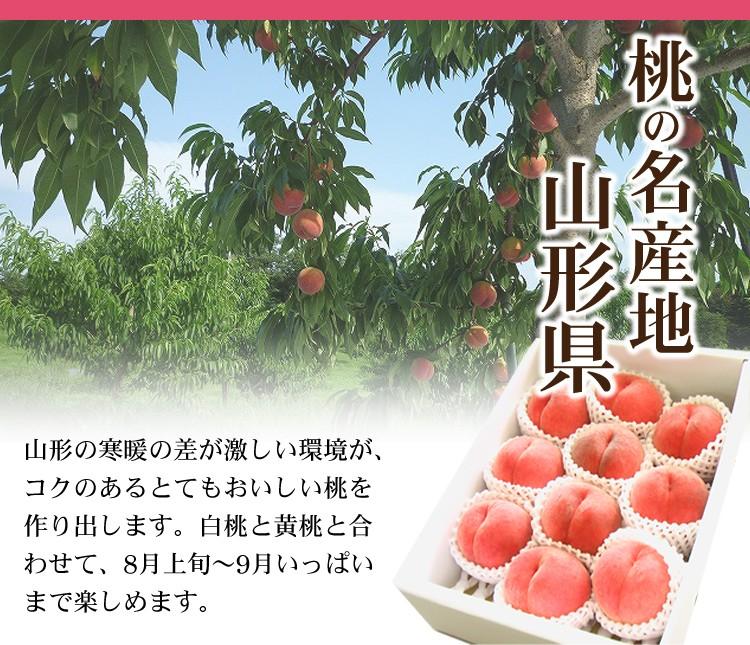 山形の桃は寒暖の差が激しいからこそおいしい桃ができるのです