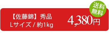 訳あり さくらんぼ 佐藤錦 1kg (秀品・Lサイズ) 送料無料