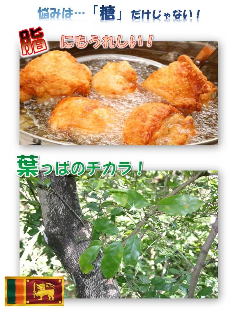 サラシアの葉の画像