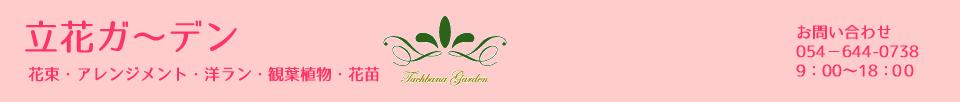 花束 アレンジメント 洋ラン 観葉植物 花苗
