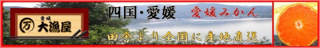 愛媛みかん 産地直送 のお店 大漁屋 激安愛媛みかん10kg2780円にて販売中