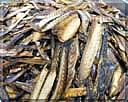 鰹節とサバ節の混合