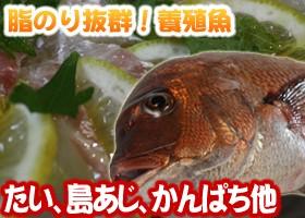 養殖魚、たい、シマアジ、かんぱち他