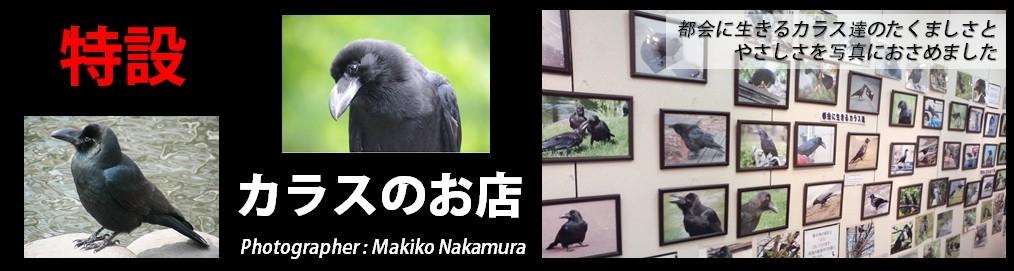 台湾マスクYahoo!店内特設「カラスのお店」へようこそ。NPO法人札幌カラス研究会代表の中村眞樹子撮影による写真を販売しています。カラスのお店の売上の一部は同法人の活動費として寄付に充てられます。