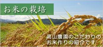 お米の栽培