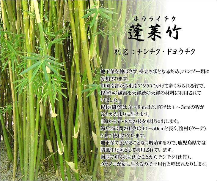 蓬莱竹の特徴