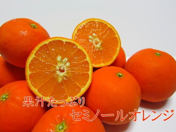 果汁たっぷりセミノールオレンジ