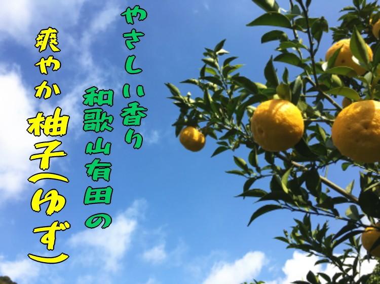 爽やかな香りの有田の柚子(ユズ)