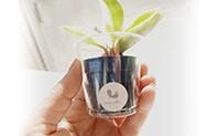 ハイドロカルチャー 植物