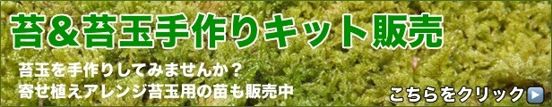 苔玉作りキット