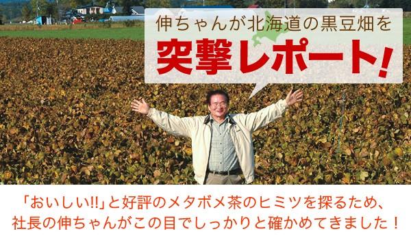 伸ちゃんが北海道の黒豆畑を突撃レポート!