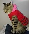 猫の服 ワンピース・ドレス・ス