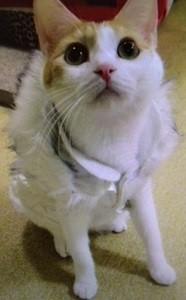 猫の服 ジャンパー にゃんジャン