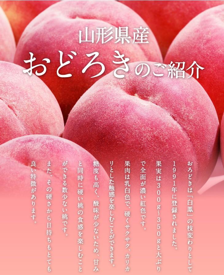 山形県産白桃おどろきのご紹介 | おろどきは「白鳳」の枝変わりとして1991年に登録されました。果実は300g〜350gと大ぶりで全面が濃い紅色です。果肉は乳白色で、硬くサクサク、カリカリとした触感を楽しむことができます。糖度も高く、酸味が少ないため、甘みと同時に硬い桃の食感を楽しむことができる数少ない桃です。また、その硬さから日持ちもとても良い特徴があります。