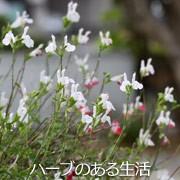 ハーブ工房 兵庫県三木産ハーブ100%使用のハーブ加工品