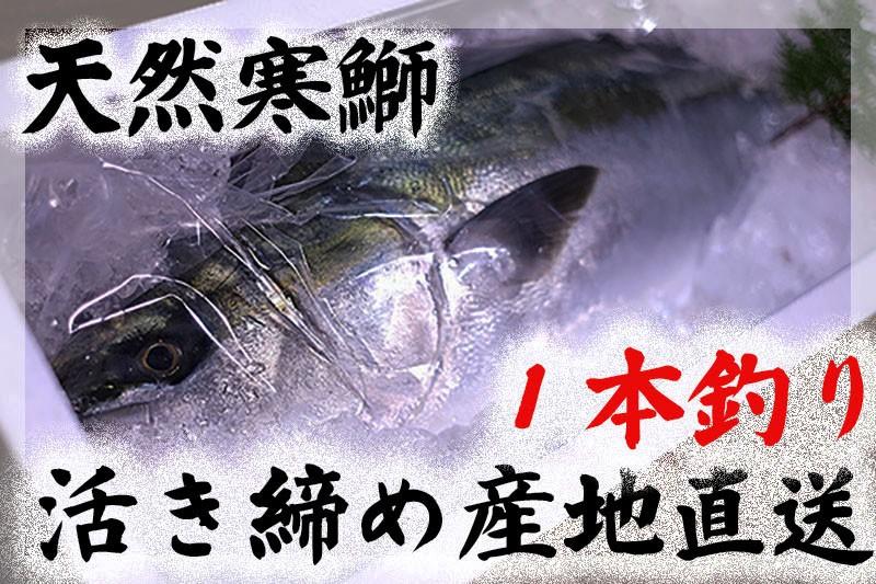 長崎県!寒ぶりの本場!玄界灘に浮かぶ壱岐の島から1本づり寒ぶり、活き〆を直送いたします。