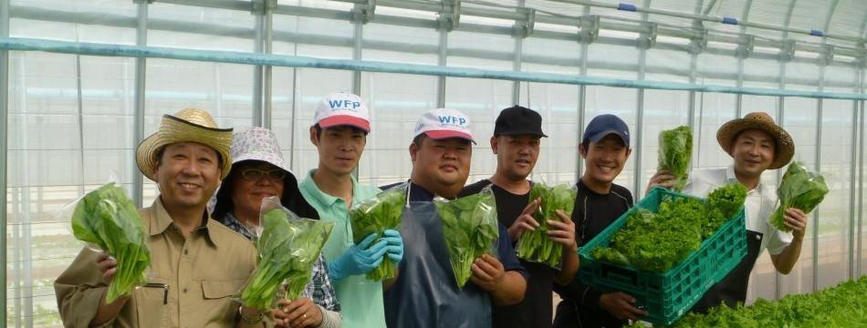 水耕栽培野菜専門てしお夢ふぁーむ