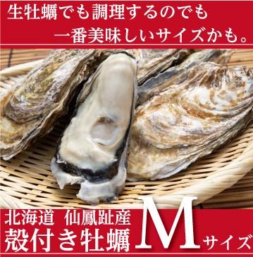 仙鳳趾の殻付き牡蠣 Mサイズ