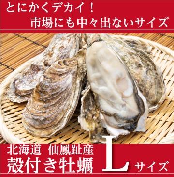 仙鳳趾の殻付き牡蠣 Lサイズ