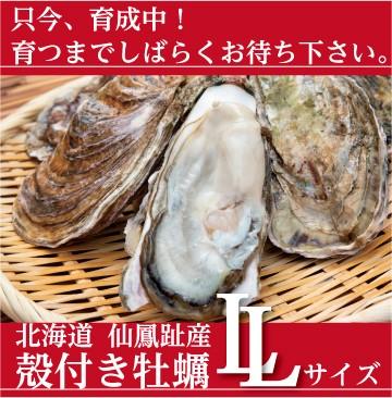 仙鳳趾の殻付き牡蠣 LLサイズ