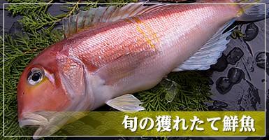 旬の獲れたて鮮魚