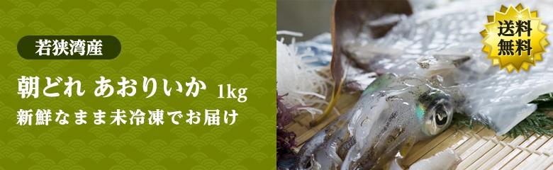 【秋の味覚】若狭湾産 朝獲れ 新鮮あおりいか 1kg(2-5杯) 送料無料