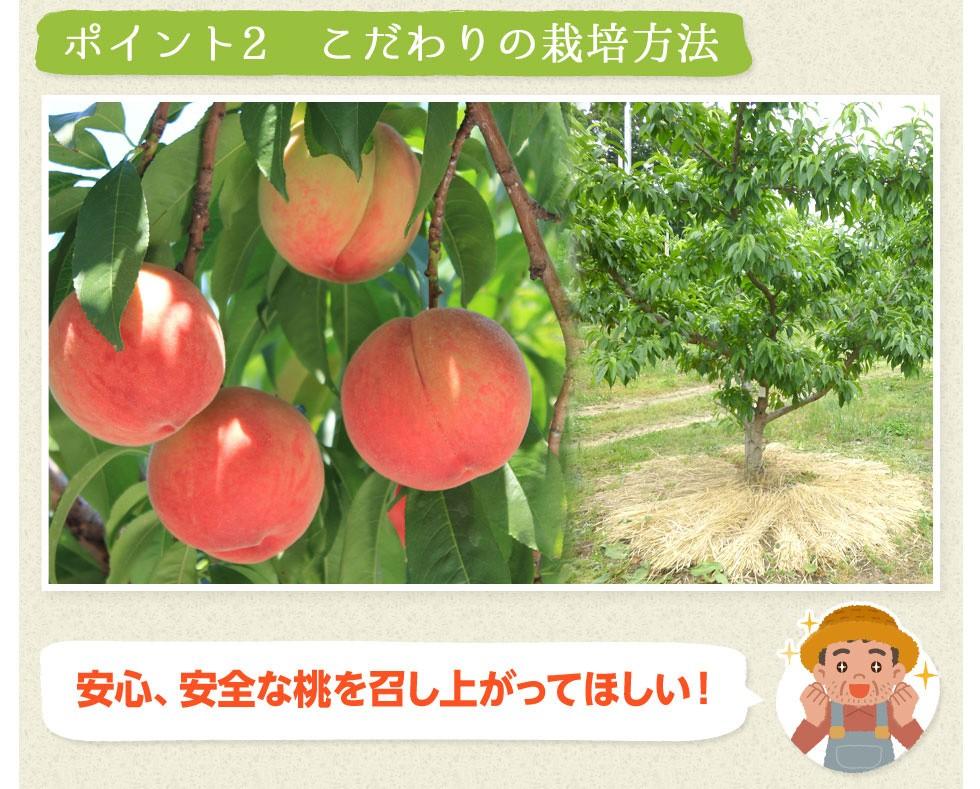 【ポイント2:こだわりの栽培方法】