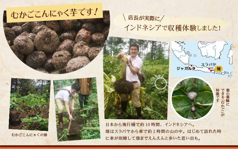 むかごこんにゃく 店長がインドネシアで収穫体験