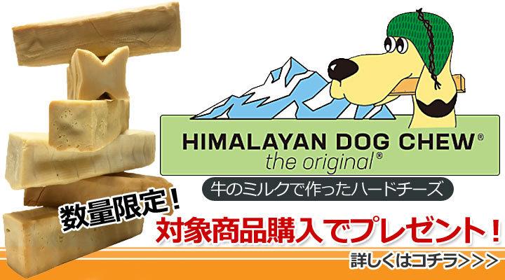 ヒマラヤンドッグチューオリジナル 1円プレゼント