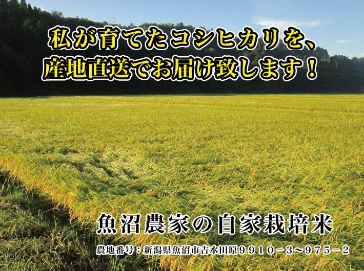 私が収穫したコシヒカリを産地直送でお届け致します! 魚沼農家の自家栽培米 農地番号:新潟県魚沼市吉水田原9910−3〜975−2