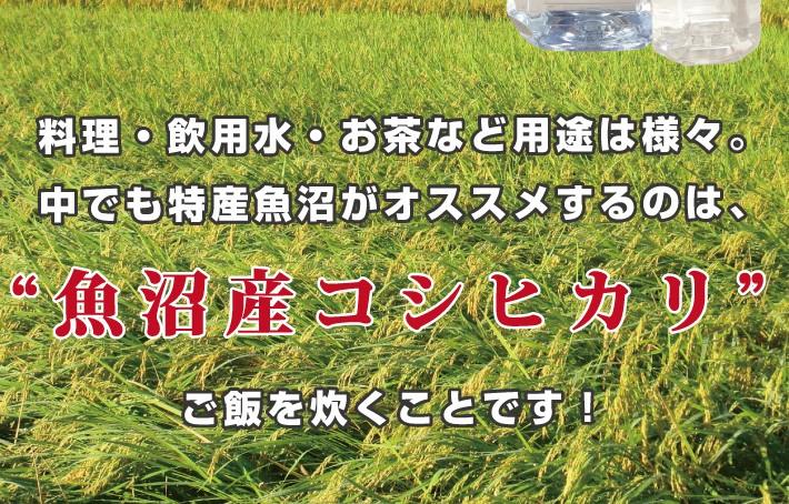 """料理・飲用水・お茶など用途は様々。中でも特産魚沼がオススメするのは、""""魚沼産コシヒカリ""""でご飯を炊くことです!"""