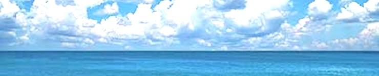 うなぎの刺身 うなぎの海 究極のうなぎ料理 静岡県 浜名湖産 最高級