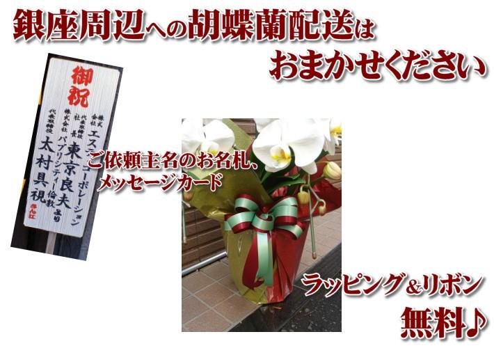 銀座の胡蝶蘭配送は東京フラワーにおまかせ