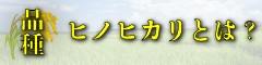 九州熊本県の美味しいお米の知識品種ヒノヒカリとは