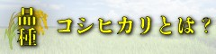 九州熊本県の美味しいお米の品種コシヒカリとは