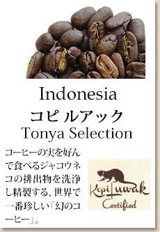 コピ・ルアック Tonya Selection