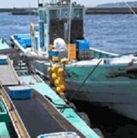 駿河湾しらす漁