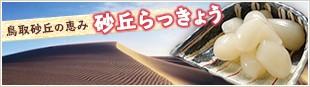 鳥取砂丘の恵み「砂丘らっきょう」