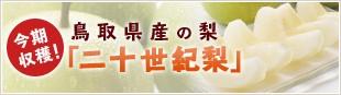 「今期収穫!鳥取県産の梨」  「20世紀梨」