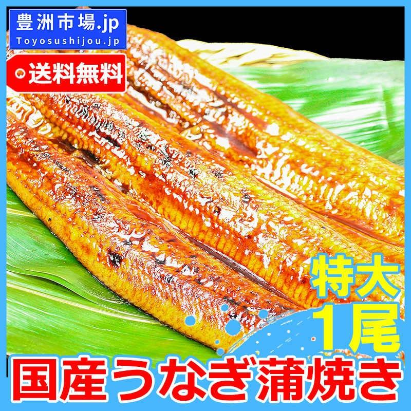 国産 鰻 豊洲市場