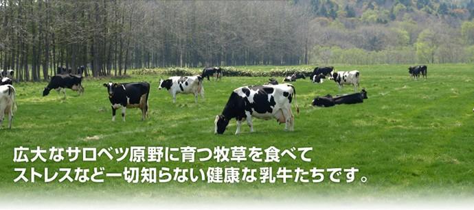広大な土地で飼育された健康な牛さんです