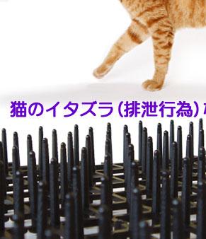 ネコのイタズラ(排泄行為)などから植物を守ります