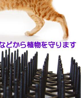 お好みの場所、ネコの集まりやすい場所などに設置するだけ