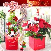 ポインセチア・クリスマスツリー