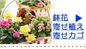 鉢花ギフト