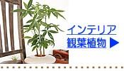 グリーンインテリア観葉植物