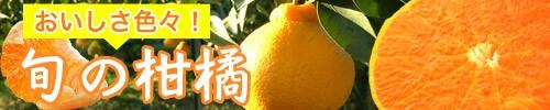 旬の柑橘コーナー