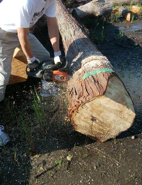 原木は愛知県東部の東三河で伐採