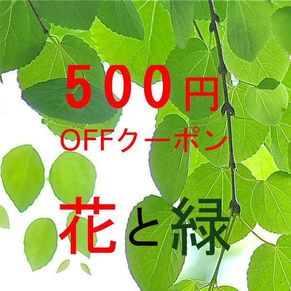 花と緑(谷川緑販)  500円OFFクーポン