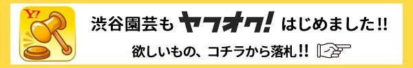 渋谷園芸ヤフオク ヤフーオークション
